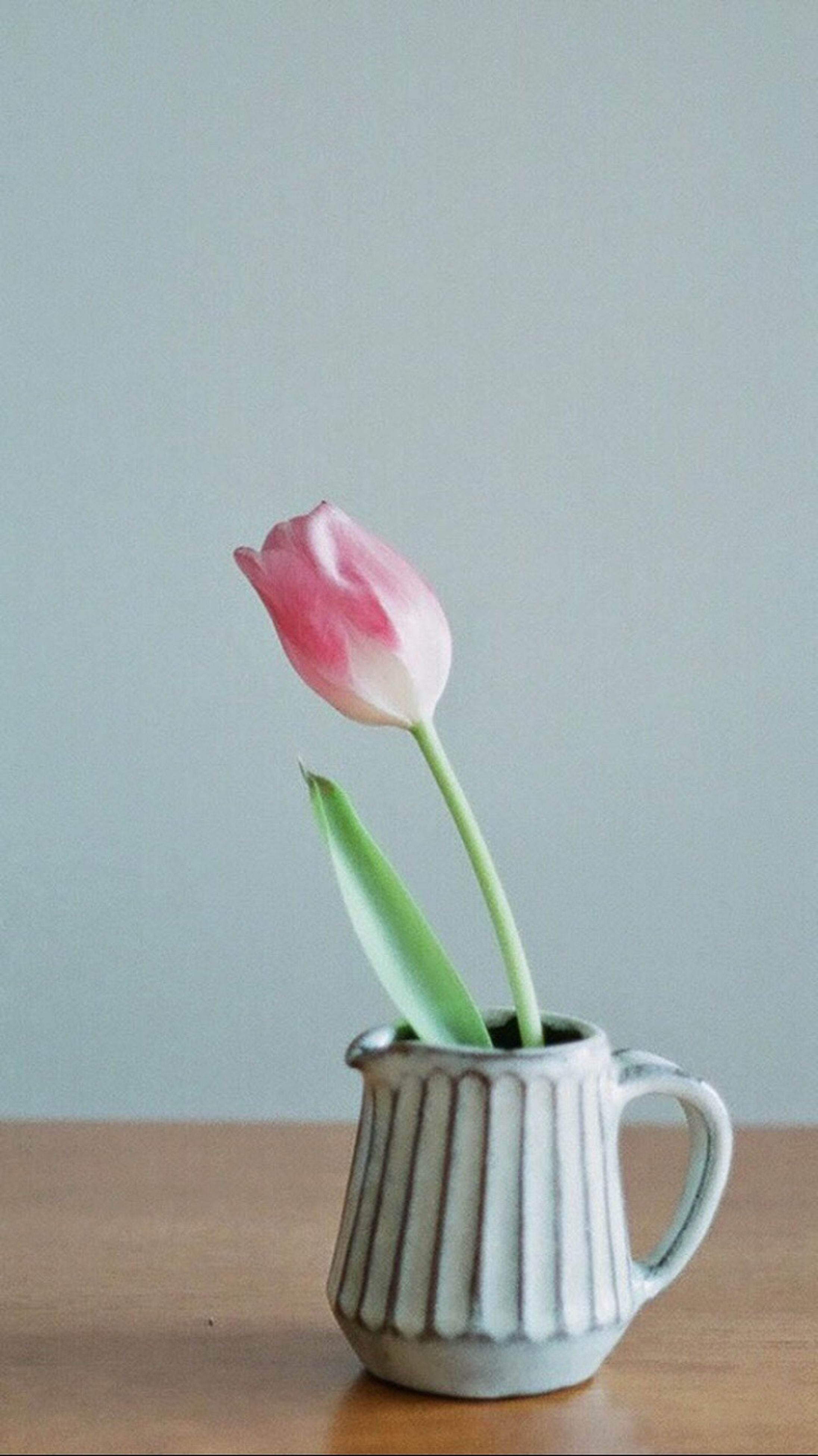 flower, freshness, no people, green color, table, indoors, nature, fragility, tulip, beauty in nature, flower head, close-up, day