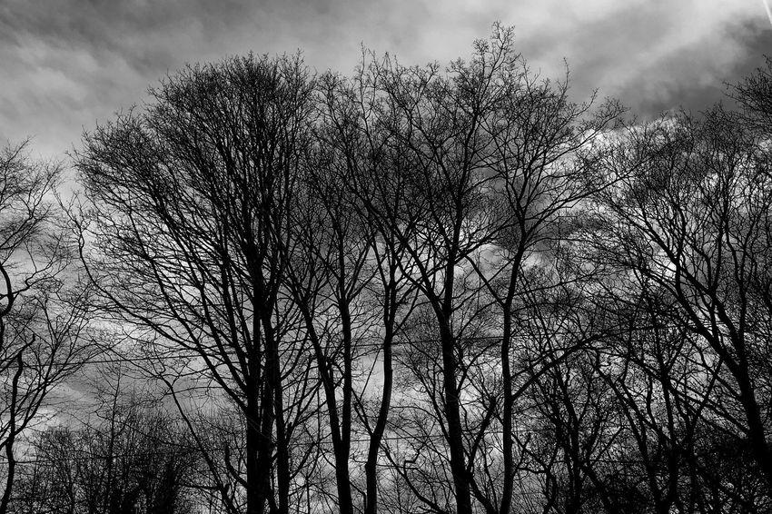 Winter Sky and Trees in Brussels , Bois De La Cambre , Nature in Blackandwhite , 645pro