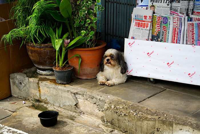 Peace of mind and watching the crowds on Bangkok's street Bangkok Newspaper Stand Peace Of Mind SweetSpot Working Hard Dog Shop Street Shop
