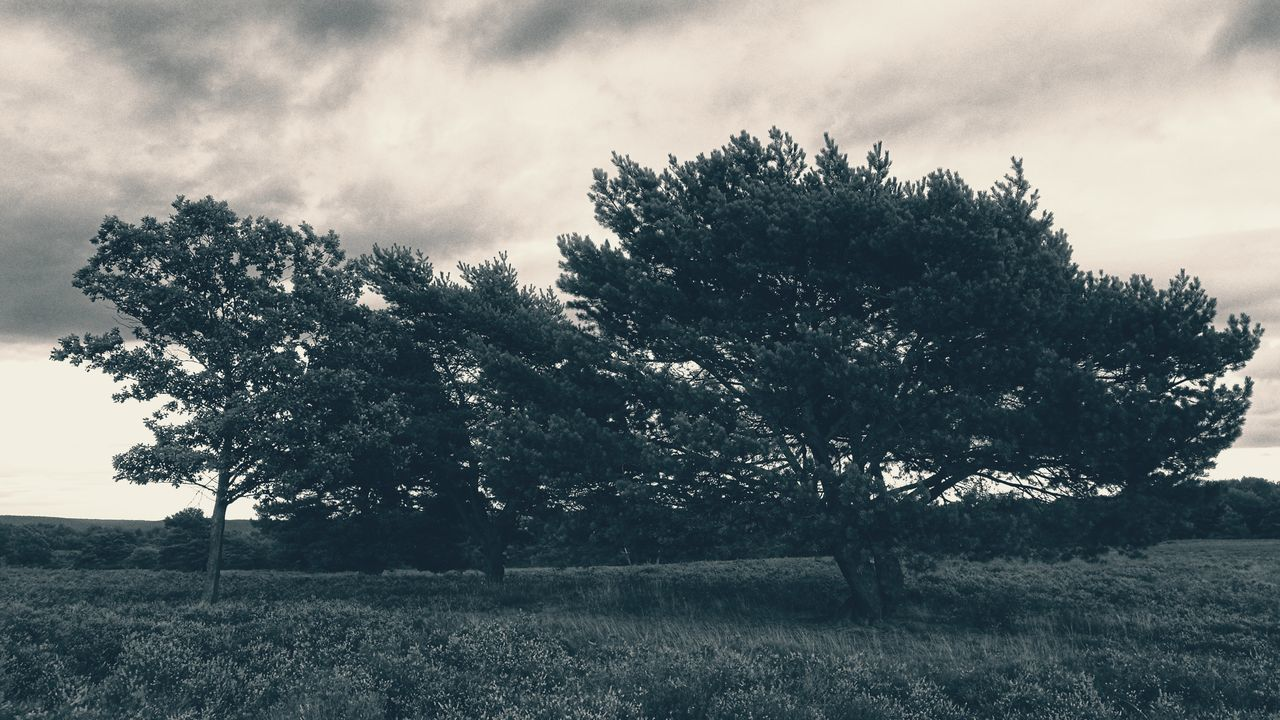Tree Sky Cloud - Sky Nature No People Outdoors Day Growth Beauty In Nature Scenics TheWeekOnEyeEM Beauty In Nature B&w Toned Bw Heather Erica Mehlinger Heide Heathland  TheWeek On EyEem Tranquil Scene Blooming Landscape Late Afternoon Light Sunset