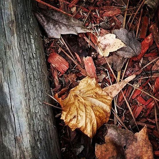 Fall! Withfilter Nexus6P Fall Season  Columbia ColumbiaSC Godworks SC