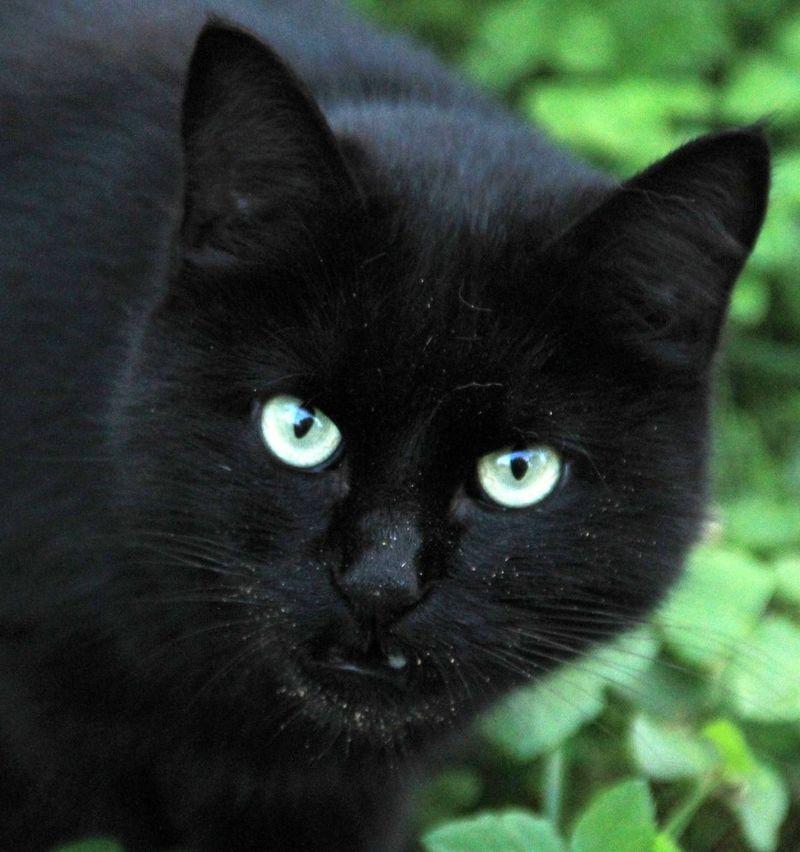Gatto selvatico Cats Gatti Randagi Gatti Cats Eyes Cat♡ Catsofinstagram EyeEm Nature Lover EyeEm Cats Cat Cat Lovers Cats 🐱 Cat Eyes Gatto😸 Gattonero Black Cat Gatto Nero Gatto