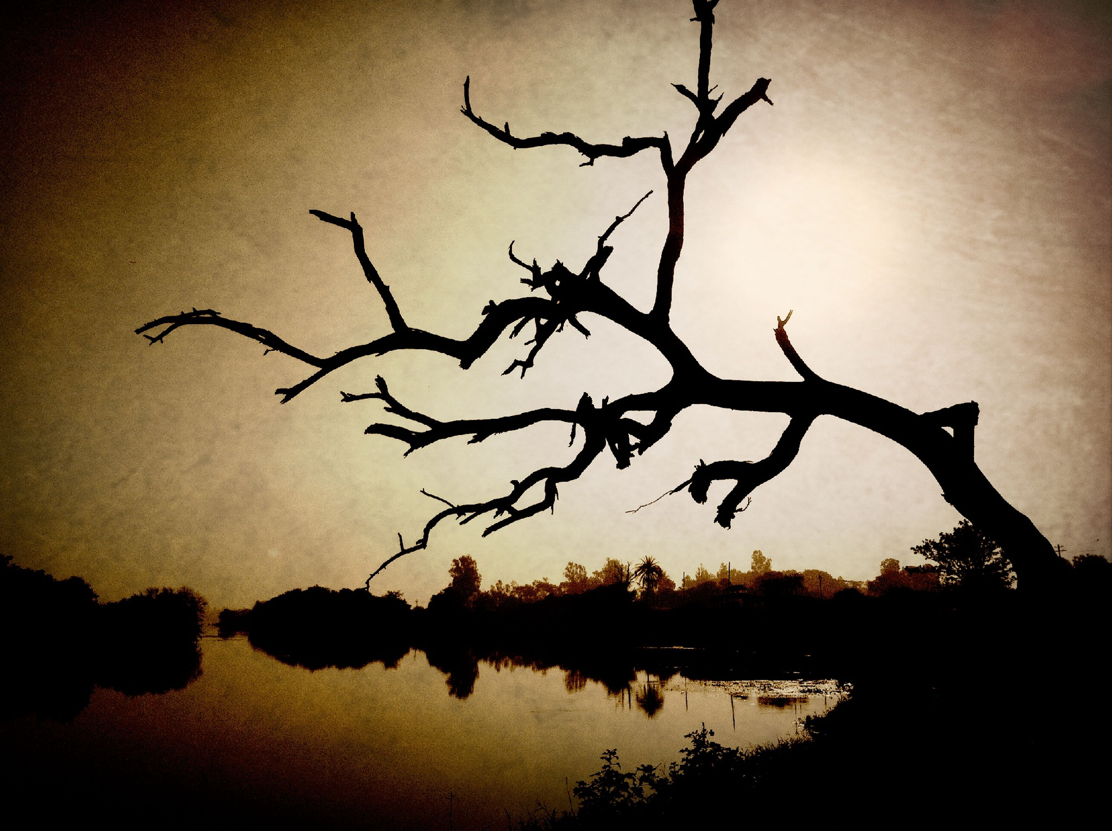 water, reflection, silhouette, sunset, tranquility, lake, branch, tranquil scene, nature, waterfront, beauty in nature, scenics, sky, tree, bare tree, dusk, idyllic, auto post production filter, outdoors, no people