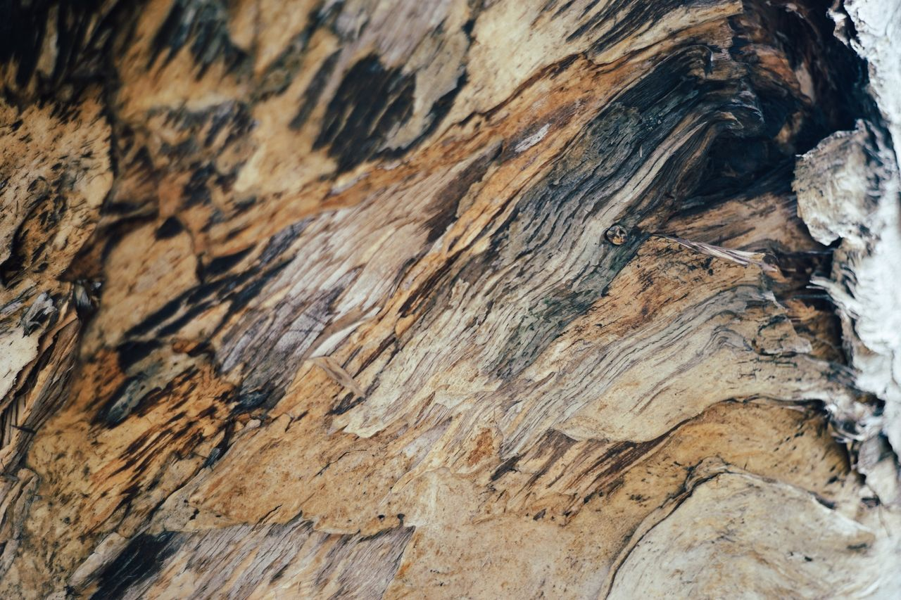 Wood - Material Close-up Textured  Rough No People Nature Backgrounds Outdoors Day Tree Knotted Wood