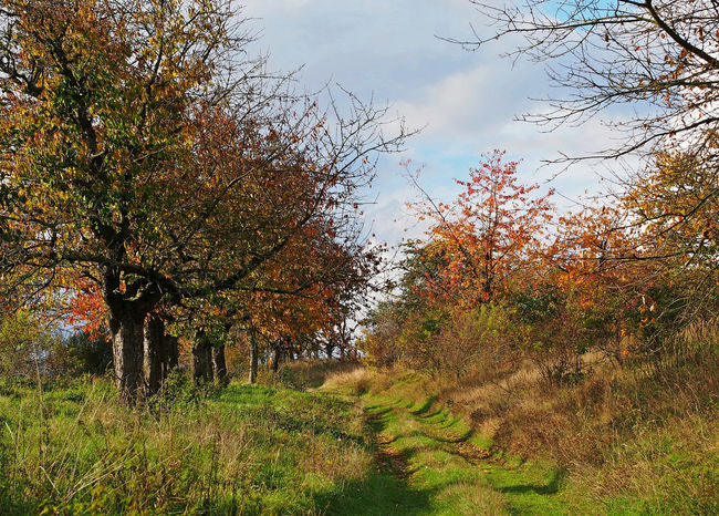 Wandern im Herbst Autumn Colors Beauty In Nature Bunte Blätter Cloud - Sky Colorful Field Grass Herbststimmung Hike Nature No People Non-urban Scene Outdoors Plant Tranquil Scene Tree Trees In Autumn Wandern Wege