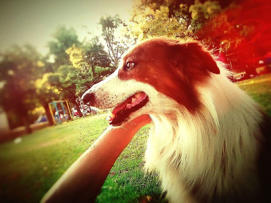 nature Enjoying Life Outdoor Photography Dog Love Dogslife Dog Pets nature