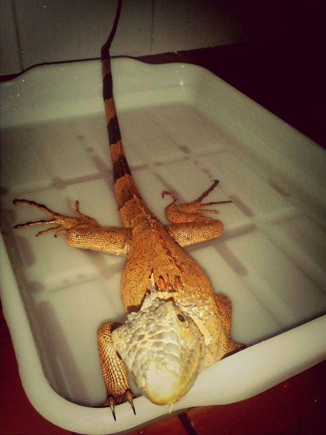 Bath time for baby Rouge Enjoying Life