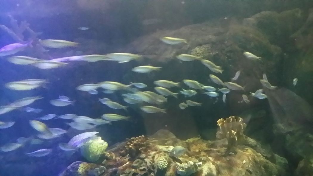 Animal Themes Animals In The Wild Beauty In Nature Fish Nature Sea Life Underwater Water
