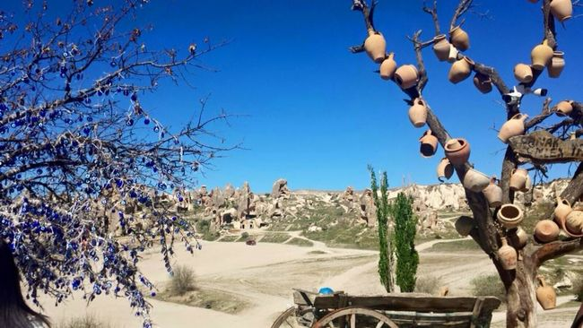 #cappadocia #devilse #fairychimneys #göreme #kappadokya #travel #TURKEY/Kocaeli @nationalpar Blue Clear Sky Day Flower Growth Nature No People Sunlight Travel Destinations Tree
