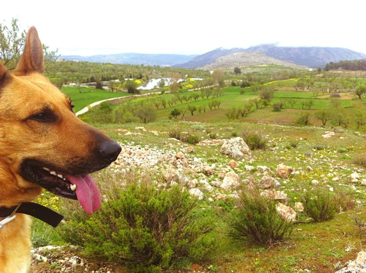 Nature... 🍃🌾 😌 Nature Nature_collection Thor  Thorthedog Sierrademaria Almería Beautiful Relax