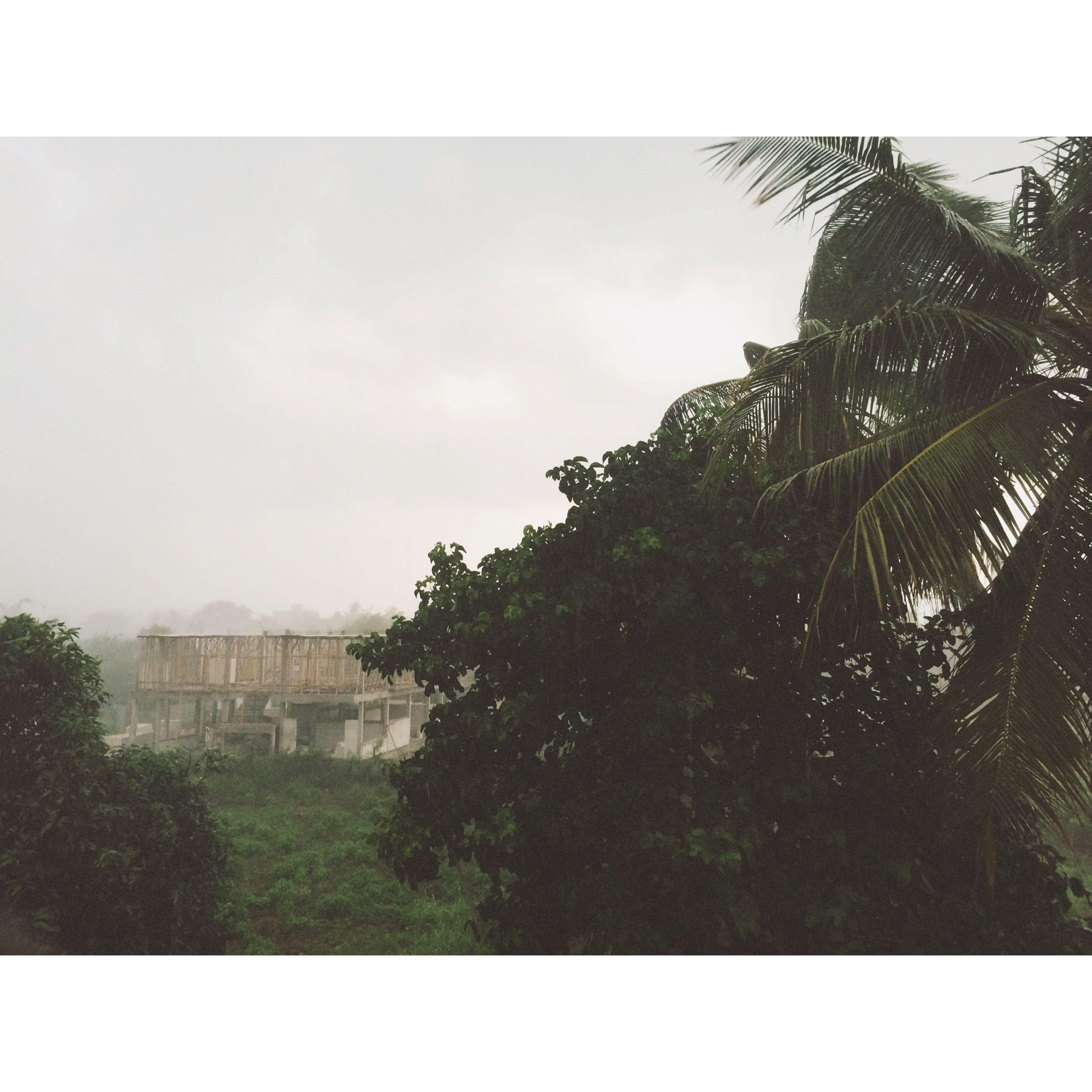 สวัสดีฝน