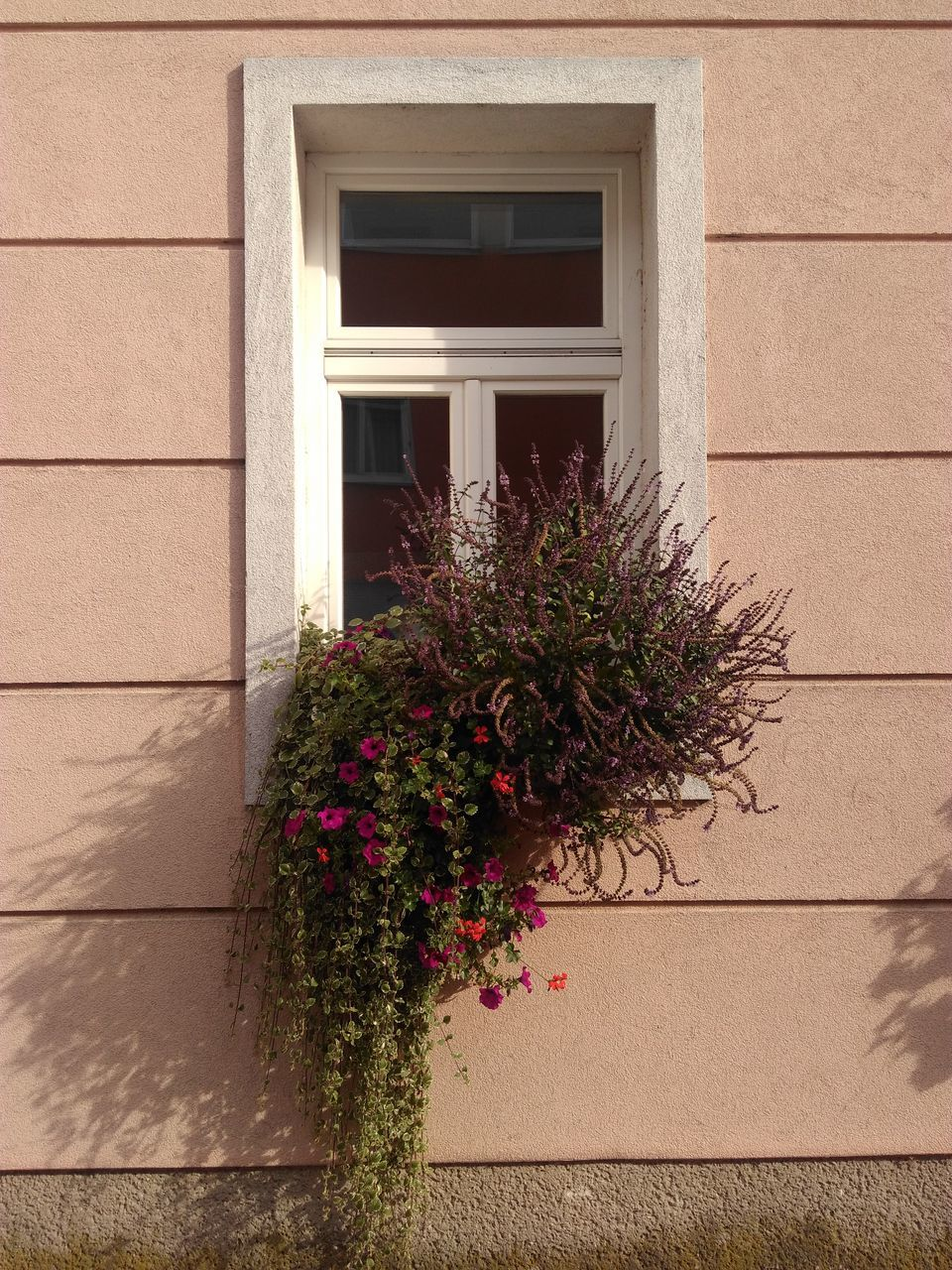 flower, growth, architecture, window, building exterior, plant, built structure, outdoors, nature, no people, window box, day
