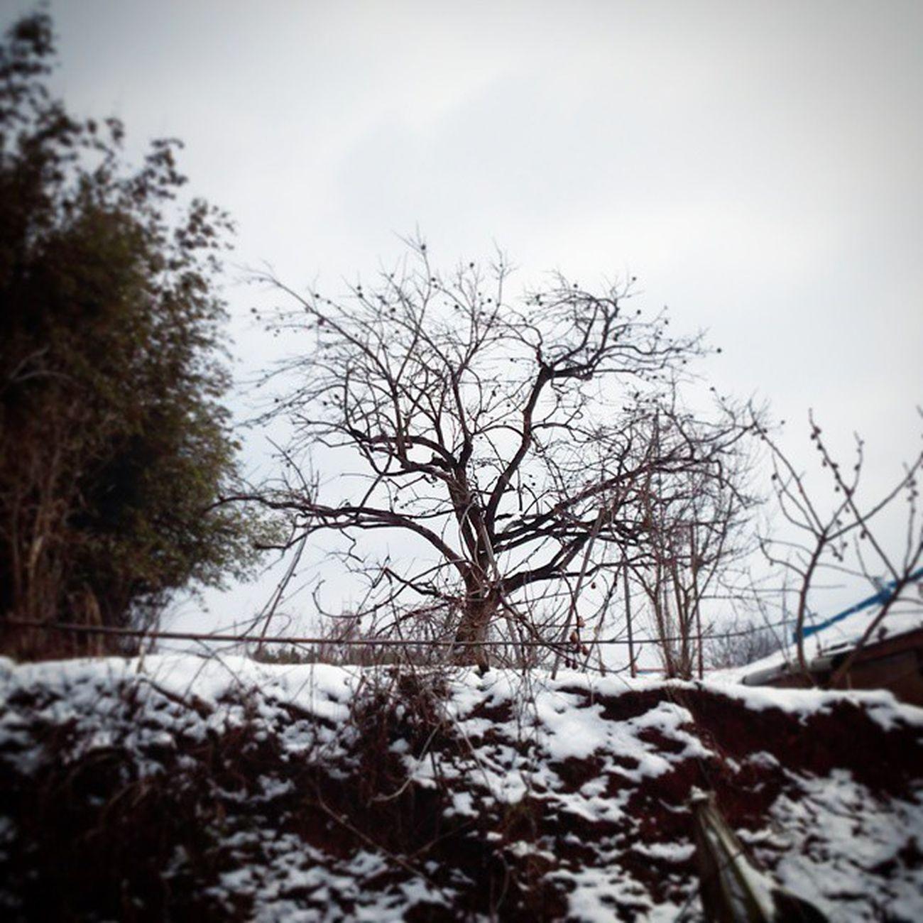 영암 에 눈 오던 날 찍은 사진. 옆집 풍경이랄까? 감나무에 감 다 떨어지니까 되게 쓸쓸해보인다. 그래도 산비둘기한쌍이 매일 찾아오니까 외로움은 덜하겠지? 눈 나무 비둘기 옆집 감나무 감 가지 외로워 쓸쓸 풍경 외로움 겨울 한겨울 완연한_봄은_아직_멀었구나