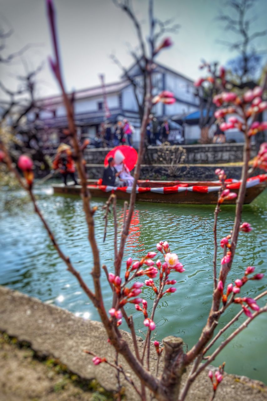 water, tree, nature, day, outdoors, river, flower, growth, beauty in nature, nautical vessel, real people, sky
