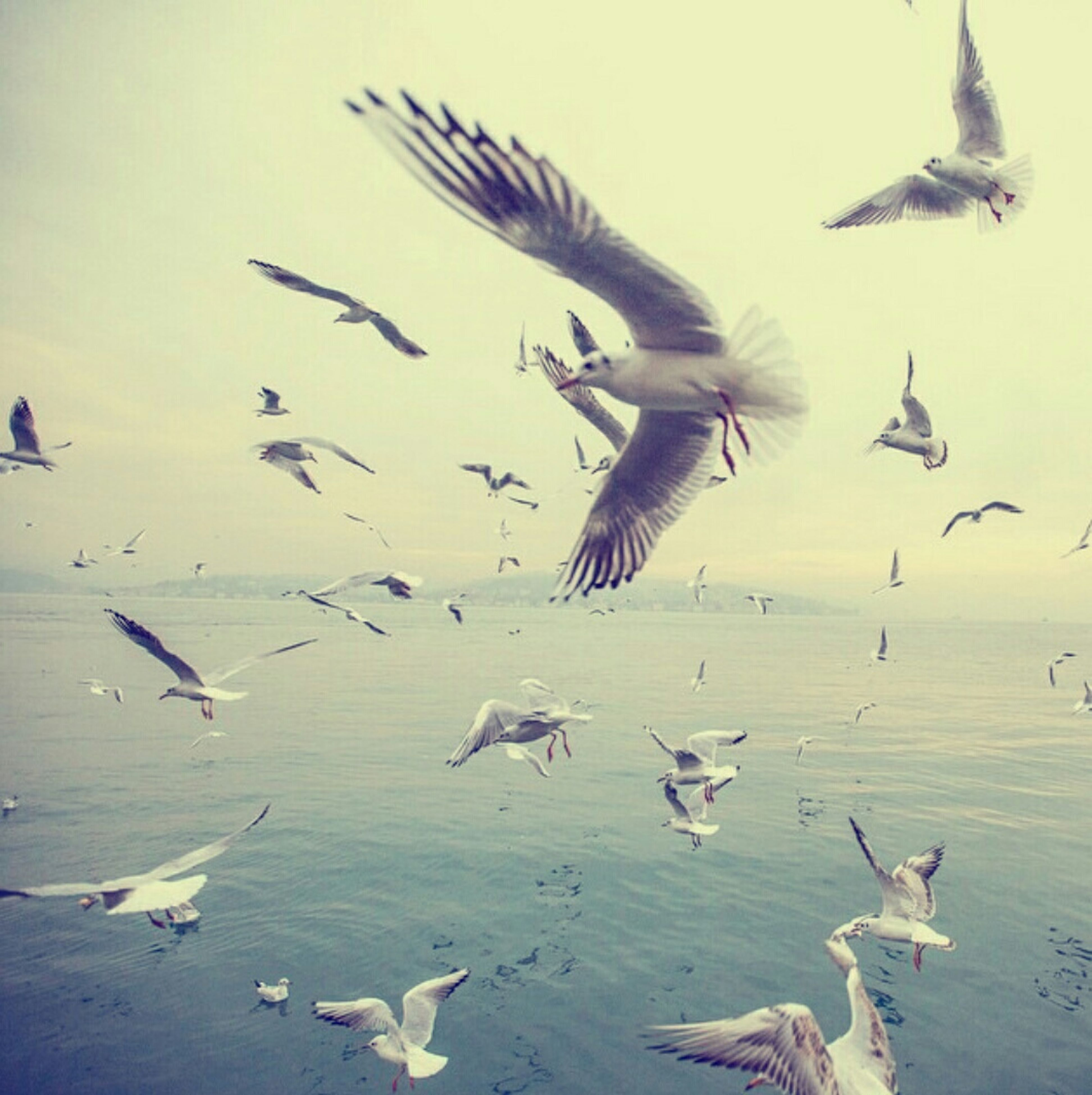 bird, animal themes, animals in the wild, wildlife, flying, flock of birds, seagull, spread wings, water, sea, nature, sky, mid-air, medium group of animals, beach, outdoors, day, beauty in nature