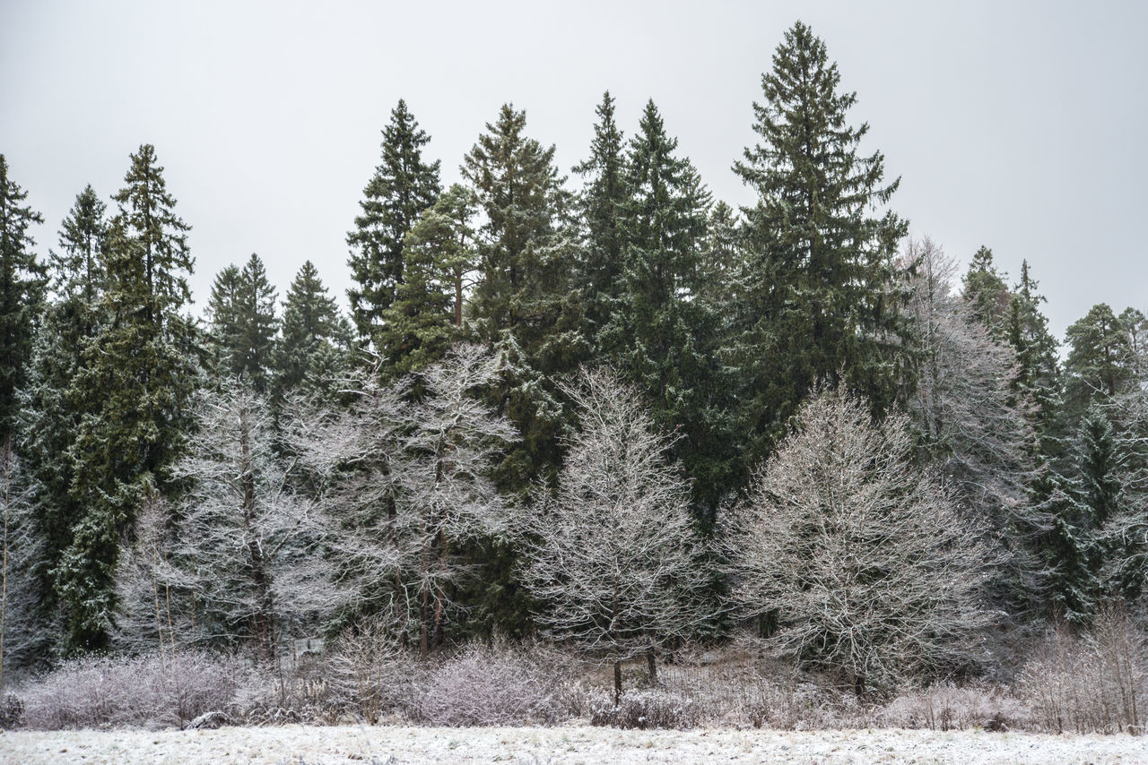 Mon Repos (Vyborg) https://en.wikipedia.org/wiki/Mon_Repos_(Vyborg) Beauty In Nature Cold Temperature Day First Snow Forest Landscape Nature No People Outdoors Sky Snow Spruce Tree Tree Winter Woods