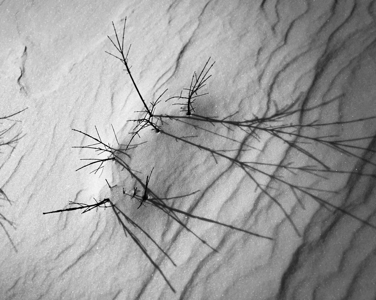 Snow ❄ Shadows Marylandphotographer Black & White Monochrome MDinFocus Winter HarfordCounty Maryland Aberdeen