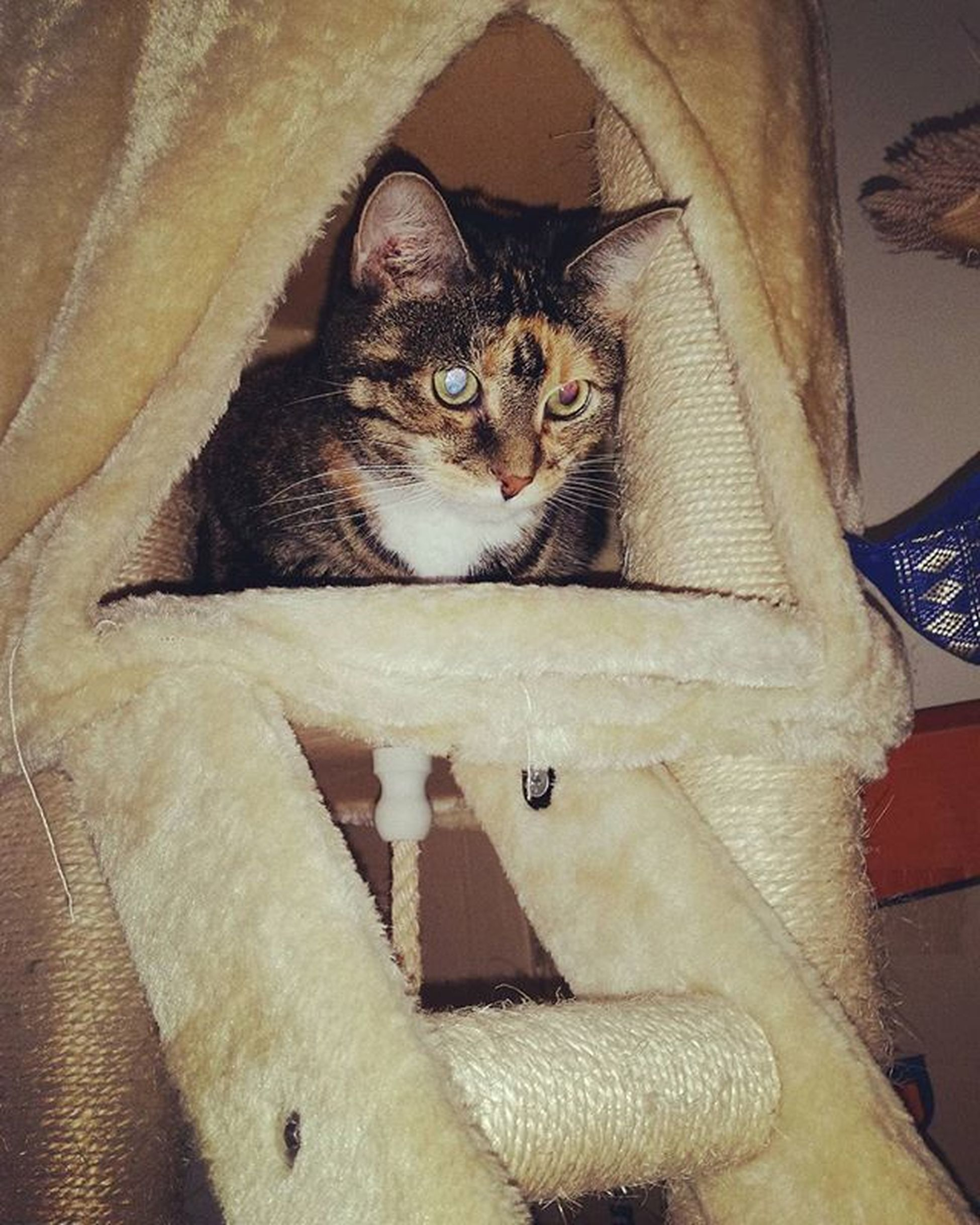 She wasn't happy to be put in there but she ended up sleeping for a bit anyway. Lol Australia Australianliving Home Happy Cat Catsofinstagram Gabby  Selfie Catselfie Socute Mylife Catscratcher Cattower
