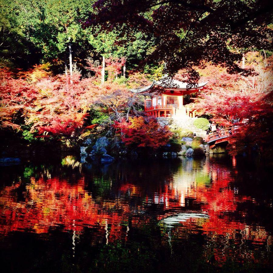 Autumnal Tints Water Surface Daigo-ji World Heritage Kyoto Japan