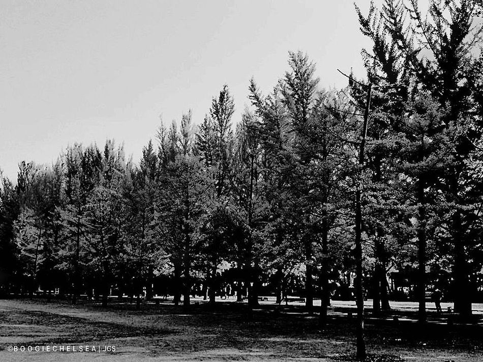 """""""Namiseom Island"""" CHUNCHEON, SOUTH KOREA - ASIA Travel Photography Beauty In Nature Bnw_photography Bnw_captures Bnw_collection Bnw_lover Bnw_nature Bnw_planet Bnw_society Bnw_travel Bnw_worldwide Bnwphotography Clear Sky Fujifeed Fujifilm Fujiholics Landscape Myfujifilm Nature No People Scenics Tranquil Scene Tranquility Travel Destinations Tree"""