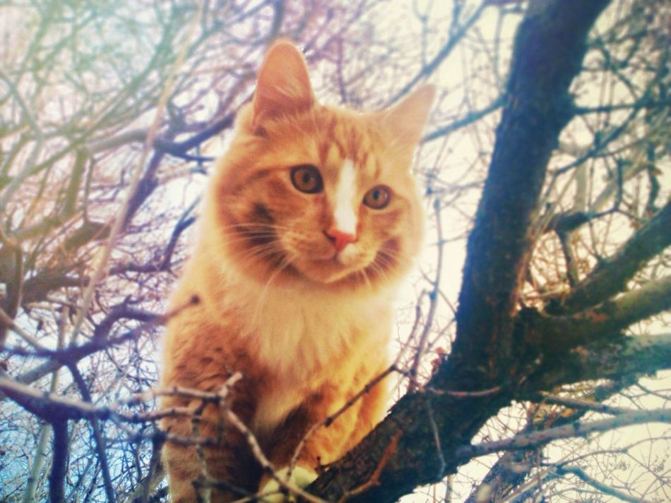 My kitty! EyeEm Never Will Give Me A Prize For This Shot, But It's Pretty Cool For Me! Buttercup Outdoors Colorful
