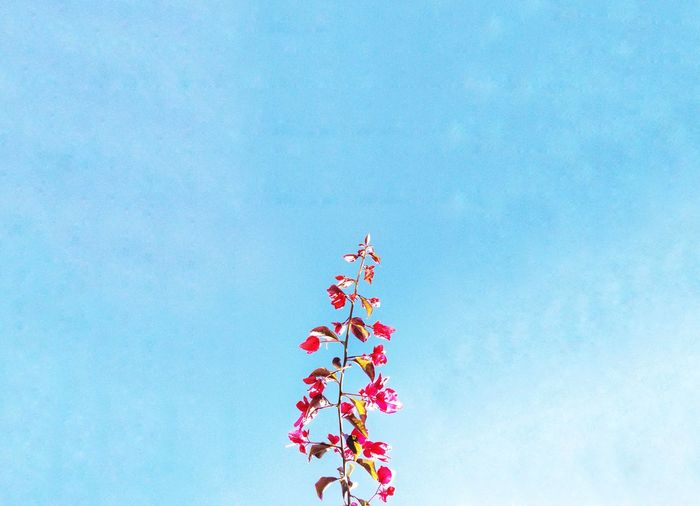 I took this photo of a flowering branch that hangs over from my neighbours yard. Today is a nice day. Low Angle View Day No People Sky Outdoors Nature Beauty In Nature Studio Shot Clear Sky EyeEm Selects Sommergefühle EyeEm Selects