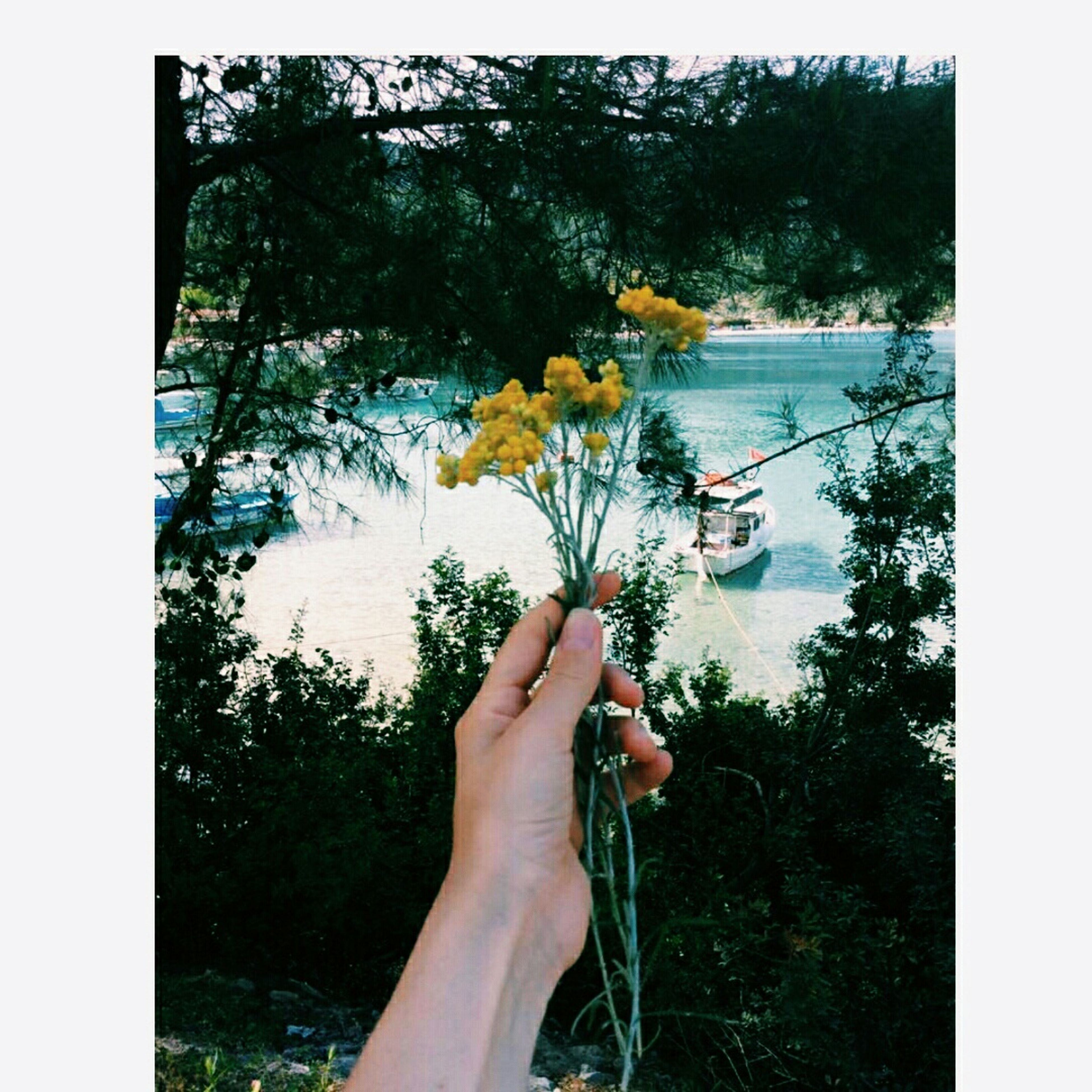 person, transfer print, part of, personal perspective, holding, auto post production filter, cropped, lifestyles, tree, water, leisure activity, unrecognizable person, human finger, lake, nature, men