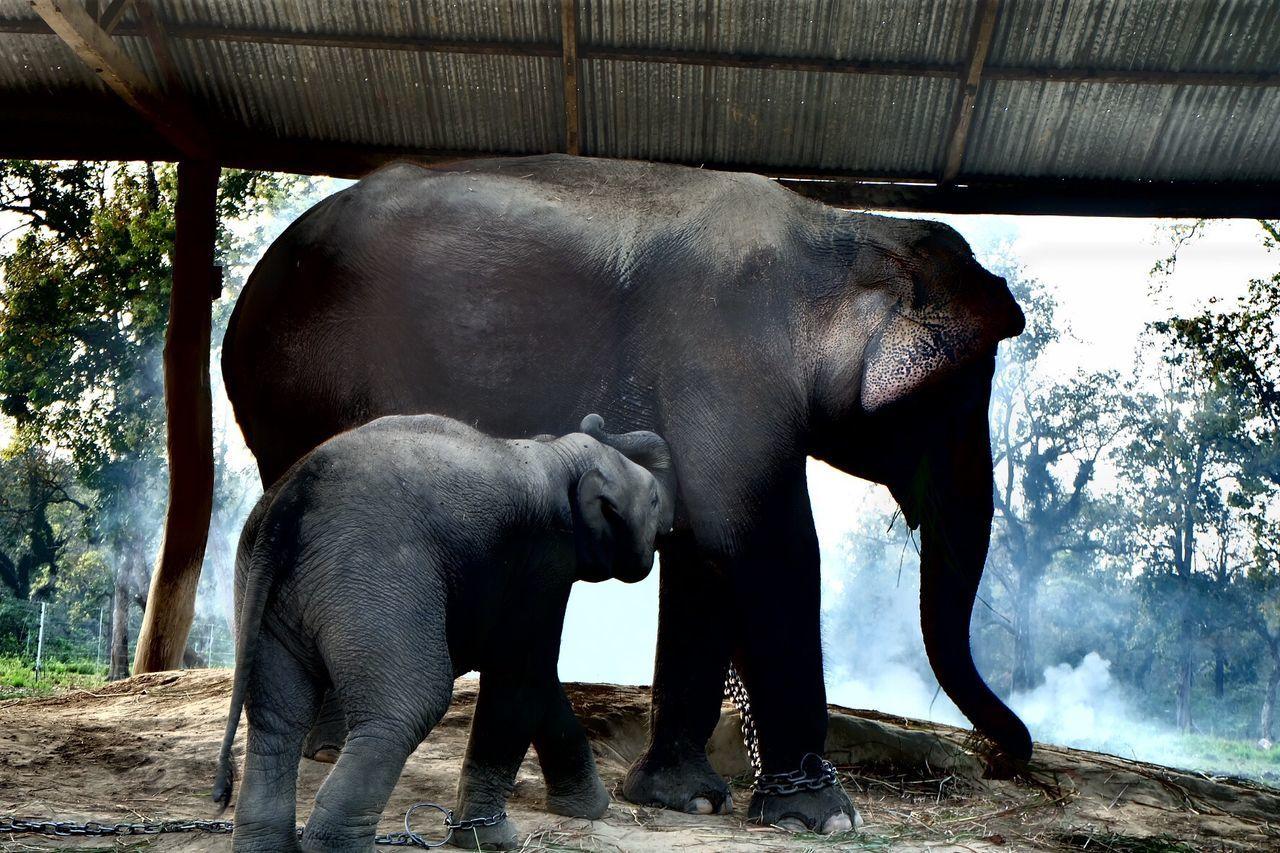 Elephant Taking Photos Travel Photography Hi!