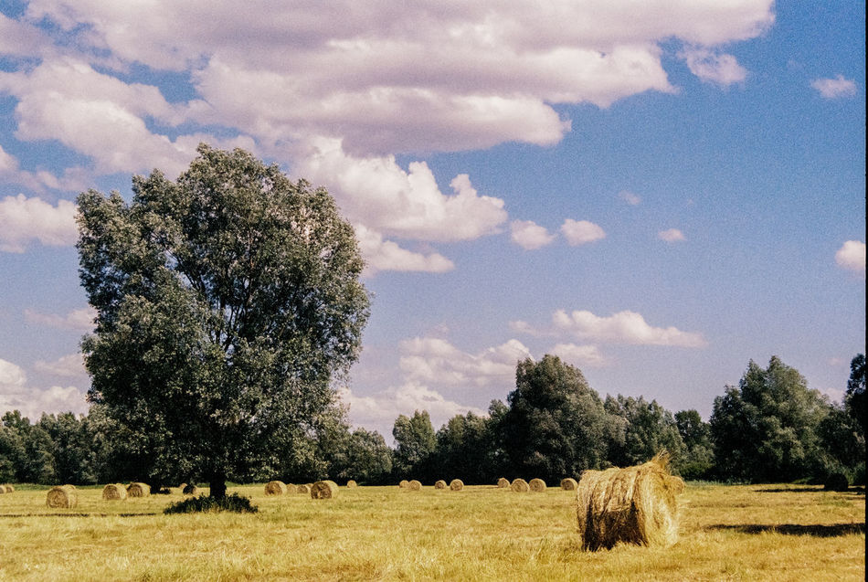 Analog Photography Cloud Film Film Photography Green Landscape Nature Sky Trees