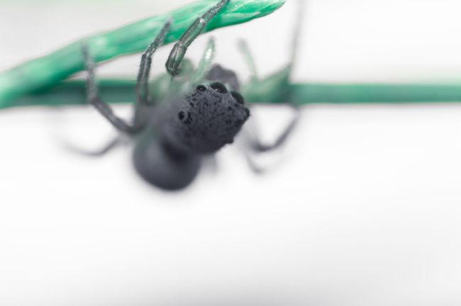kit lens for macro. Close-up Macro Macro Beauty Macro Nature Macro Photography Nature Nature's Diversities Spider