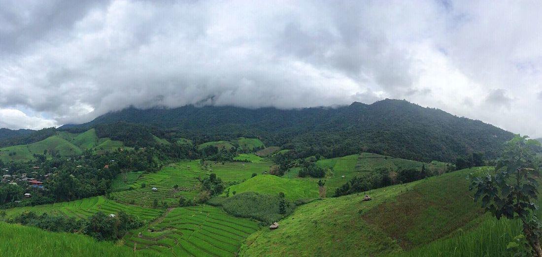 นาขั้นบันได ป่าบงเปียง Mae Chaem Chiang Mai   Thailand Agriculture Beauty In Nature Mountain Nature Landscape Cloud - Sky Sky Field Tranquility Scenics Outdoors Tranquil Scene Day Rural Scene Growth No People Green Color Clouds And Sky Cloudy Cloud Rice Seeding