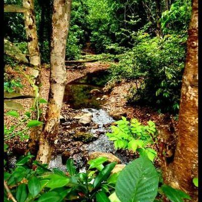Mysoretrip Mysorediaries Mysurumemes Nammamysooru Nature Beautiful Green Water Stream Instadaily Karnataka Nixsensor