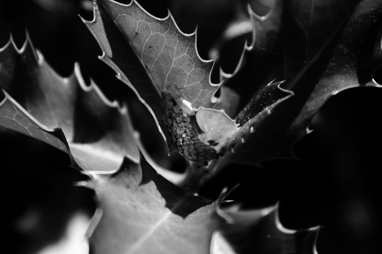 Blackandwhite Close-up Flower Head Fragility Freshness Macro Nature Night No People Outdoors
