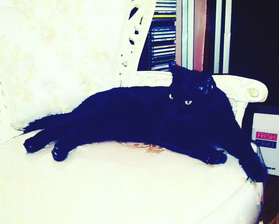 Animal Themes Pets Domestic Animals Black Color Domestic Cat Cat Resting Feline At Home Like4like Washington Heights Check This Out NYC Taking Photos Random Hello World Beautiful ♥ Velvetine Blackcats Catsofinstagram Animal