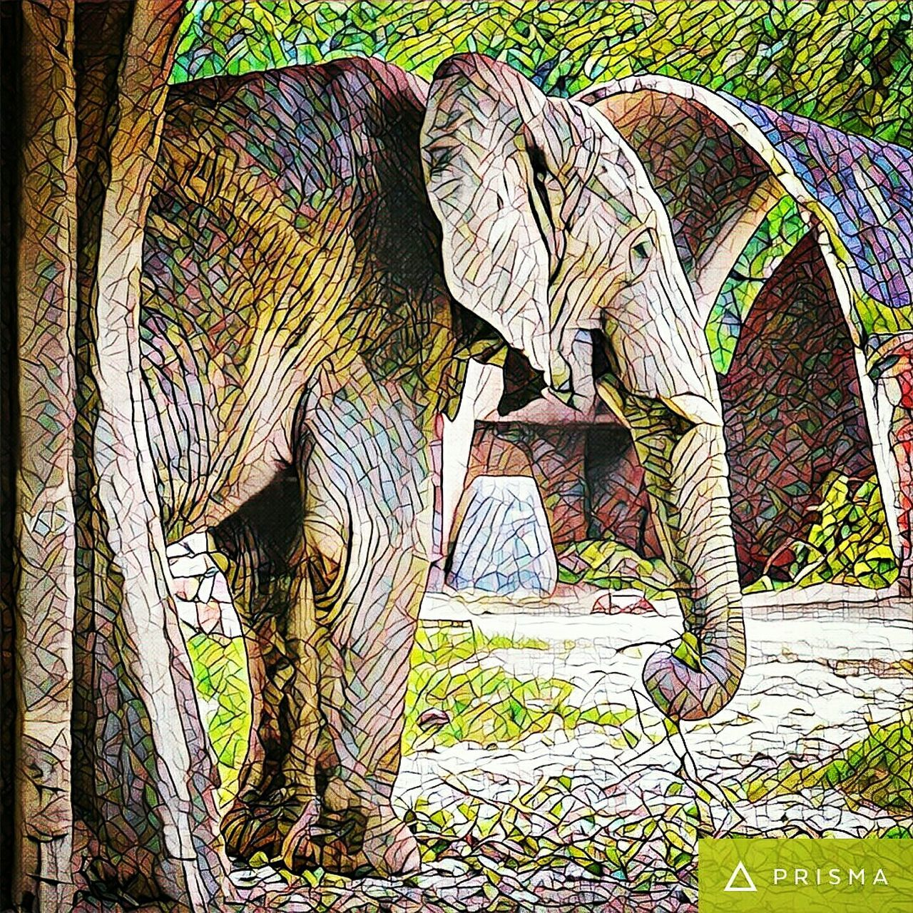 Memorable moment Colour Of Life Eyes Never Lie Elephant ♥ Elephants Wildphotography Wildlife Animal Photography Animallovers Innocent Eyes Prismacolor Prismatic Zoological Park DelhiGram Relaxing Beauty In Nature Naturesbeauty