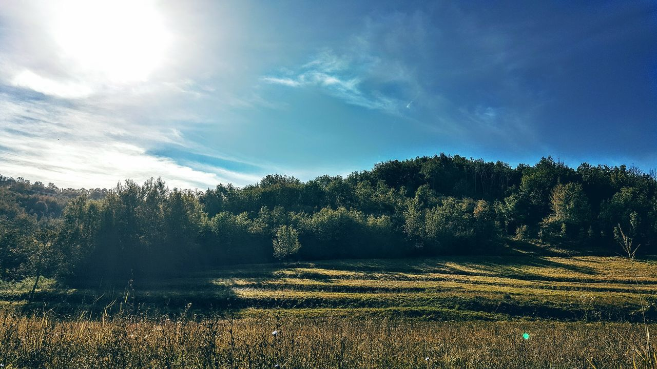 tranquil scene, nature, tranquility, beauty in nature, scenics, tree, landscape, field, sky, no people, growth, idyllic, day, outdoors, grass, sunlight, forest