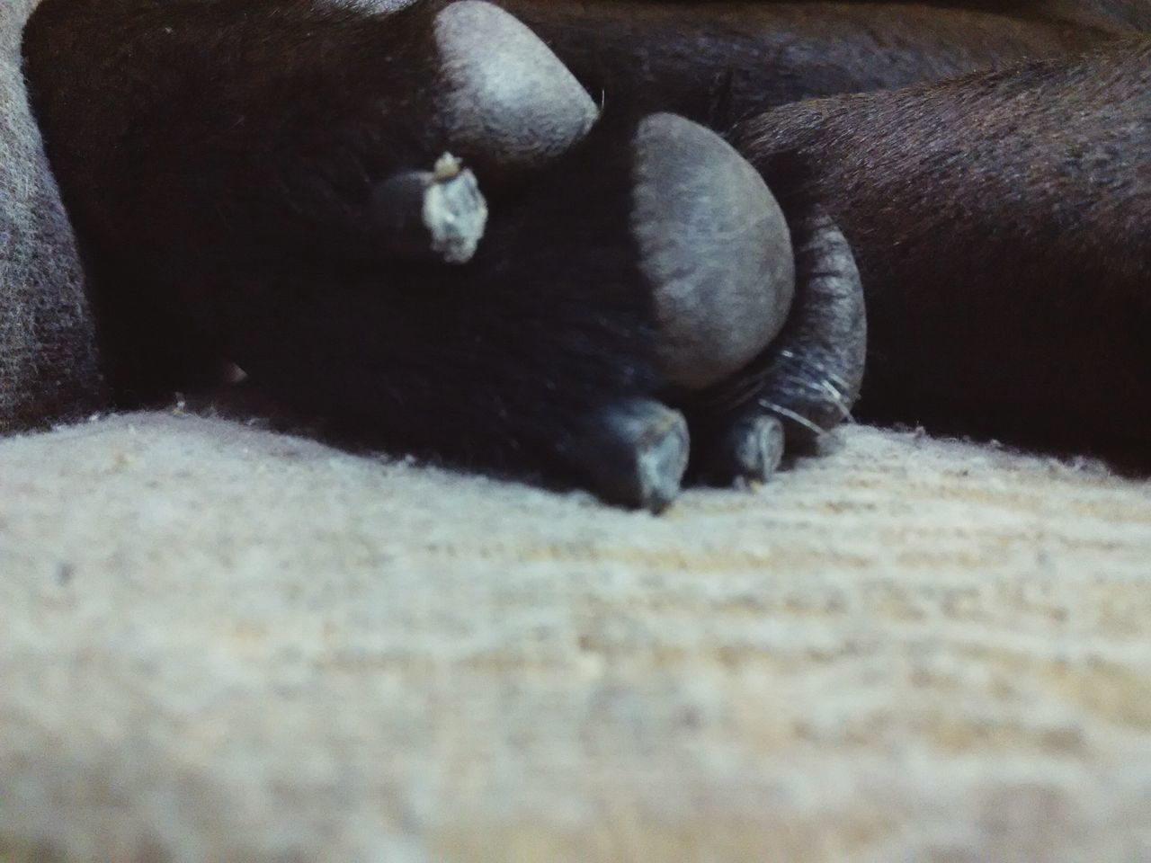 Dogs Dog Love Dog❤ Dogslife Doggy Love Dog Lover Dog Photography Dogs Of EyeEm Doglovers Dog Sleeping  EyeEmNewHere