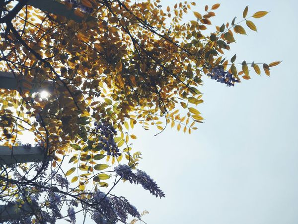 【leaves】 Smartphonephotography Vscocam