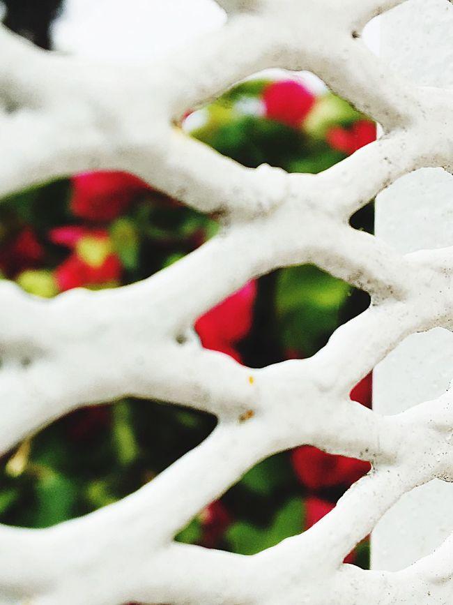 Flowers, Nature And Beauty Where I Live OceansideCA Eyeem Market CaptureTheMoment The Great Outdoors - 2016 EyeEm Awards Showcase July First Eyeem Photo EyeEm Best Shots Best Eyeem Pics Artistic Expression Enjoying Life Flowers,Plants & Garden
