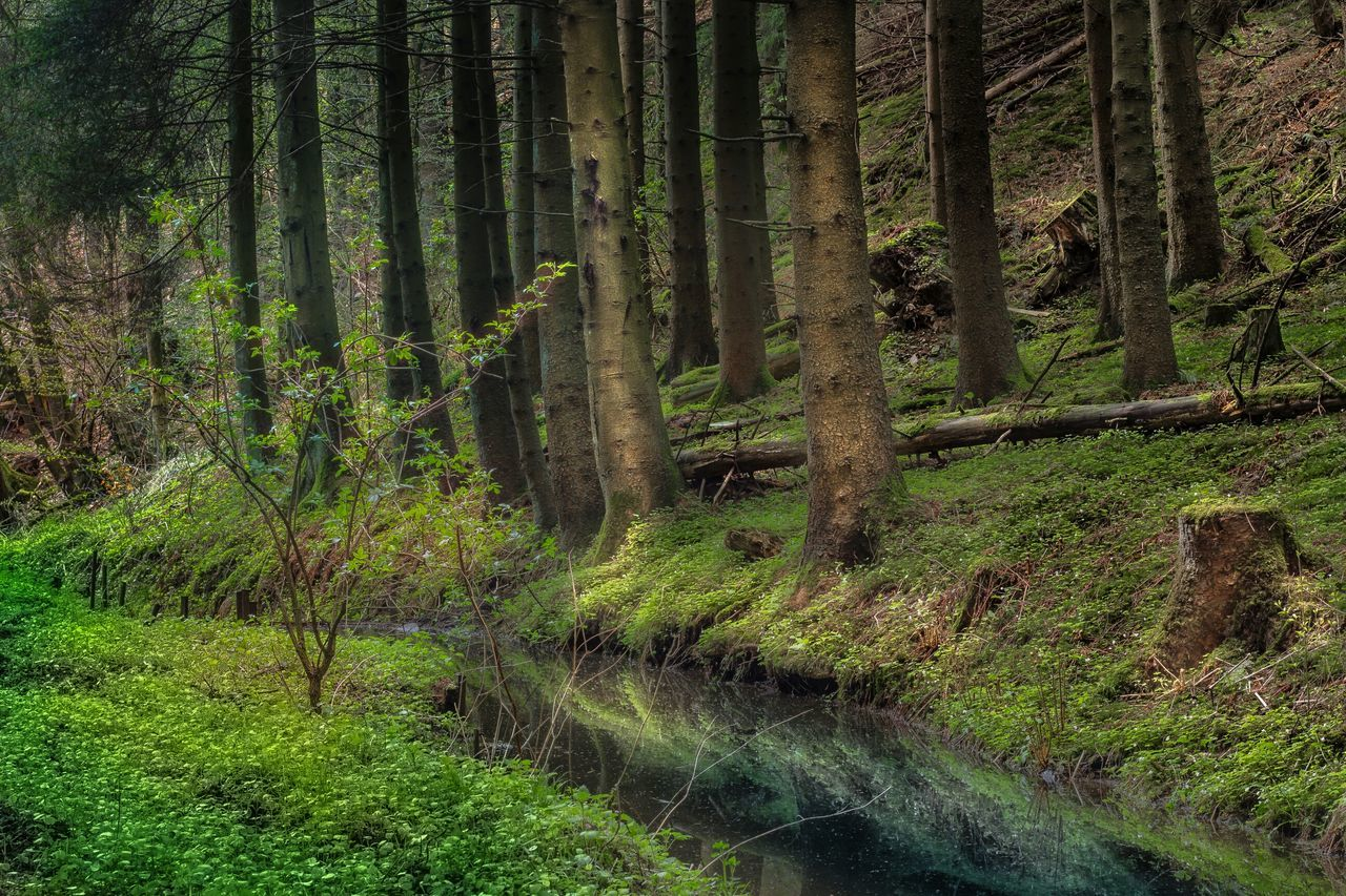 nature, forest, tranquil scene, tranquility, grass, scenics, tree trunk, outdoors, no people, day, beauty in nature, landscape, tree, growth