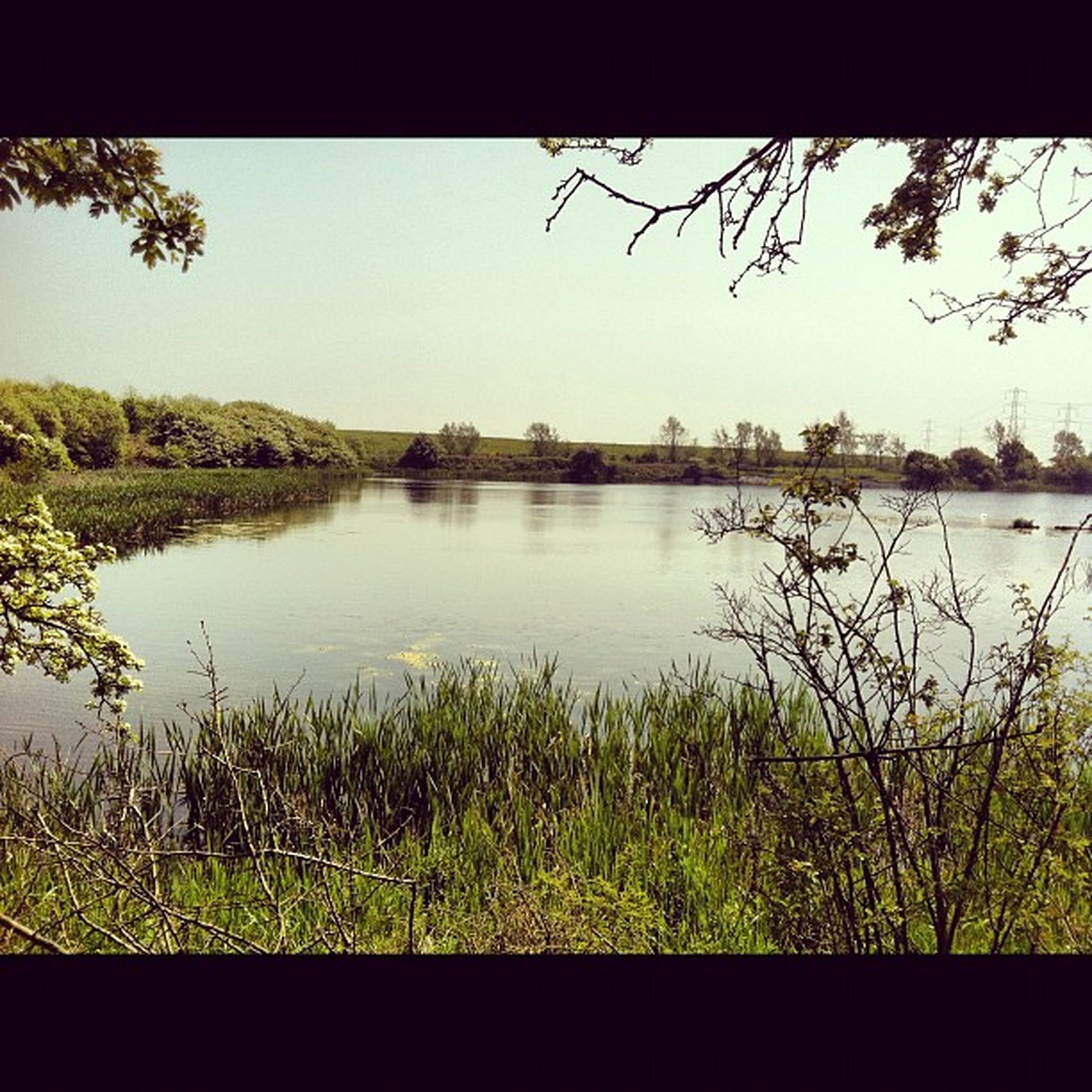 water, clear sky, lake, tree, tranquility, tranquil scene, grass, growth, reflection, plant, nature, scenics, river, beauty in nature, copy space, lakeshore, day, transfer print, sky, calm