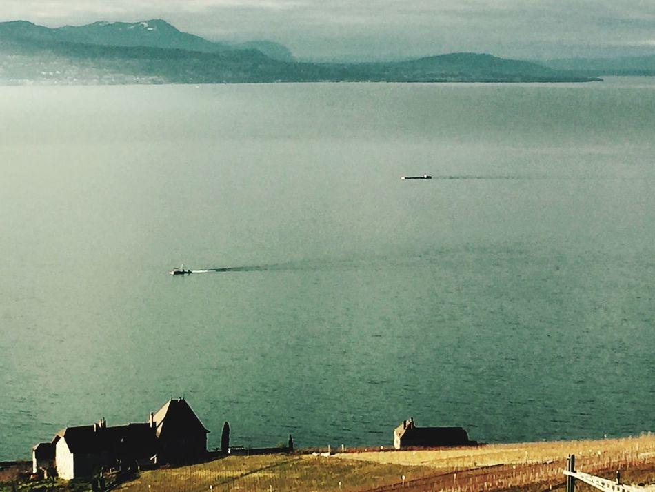 Boats Racing Epesses Vinyard Enjoying The View Lake Leman