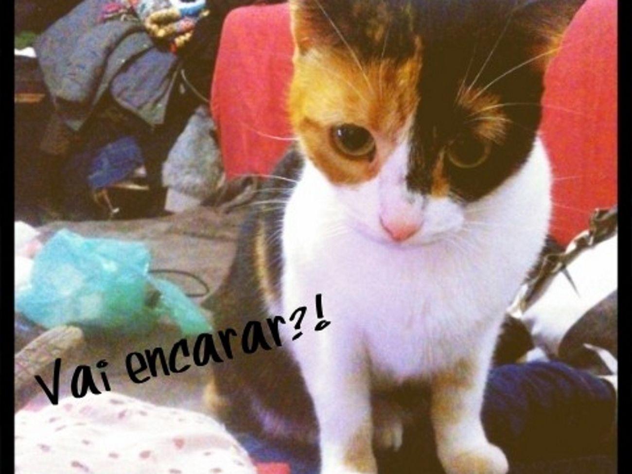 Cat #Ludmyla