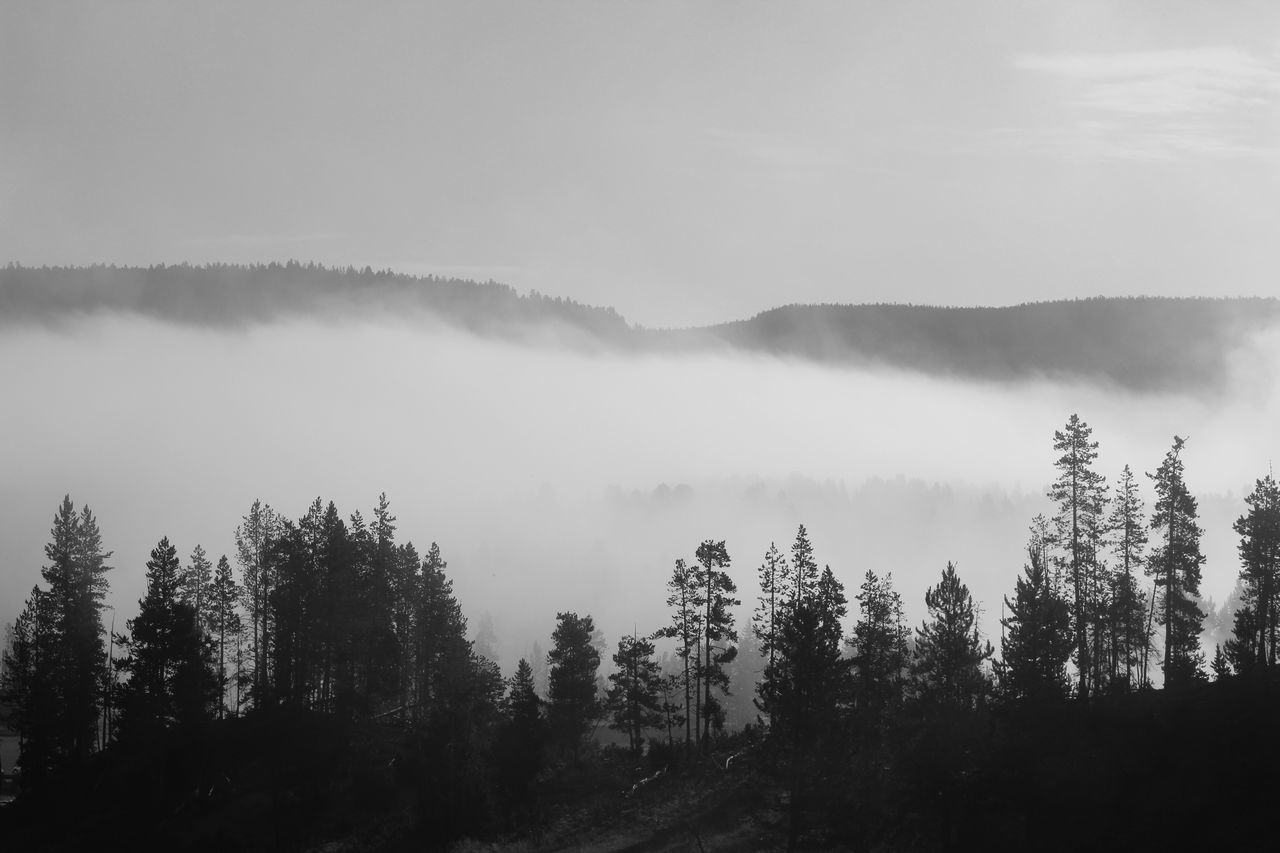 The mist has taken over. I am sinking, I am sinking, I am... Landscape Nature EyeEm Nature Lover Eye4photography  Blackandwhite Black And White Creative Light And Shadow Edge Of The World Protecting Where We Play Deceptively Simple