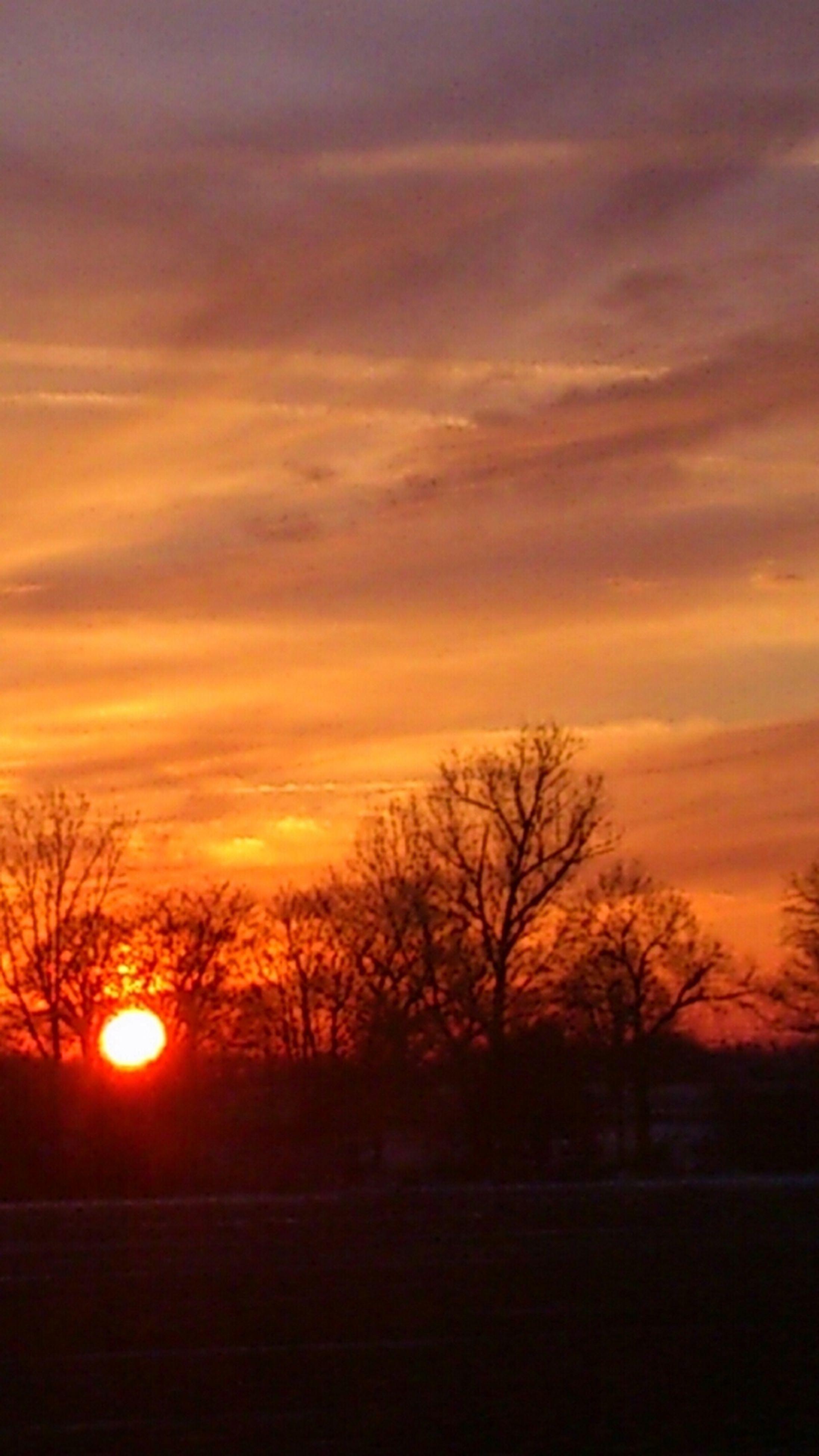 sunset, silhouette, orange color, sky, tranquil scene, tranquility, bare tree, scenics, tree, beauty in nature, landscape, field, sun, nature, idyllic, cloud - sky, dramatic sky, branch, cloud, outdoors