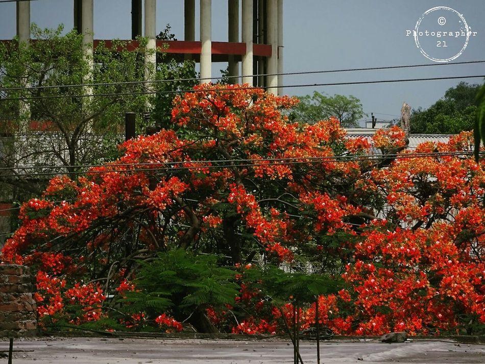 Orange leaves Eye4photography  EyeEmNewHere Orange Orange Leaves