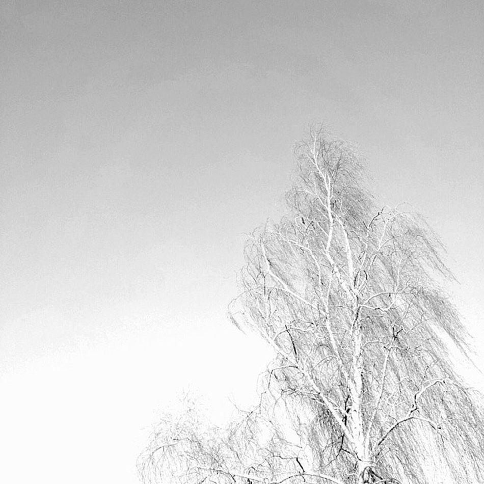 Lonely Tree am Cossi Sunshine loveit coldbutsunny winter2014