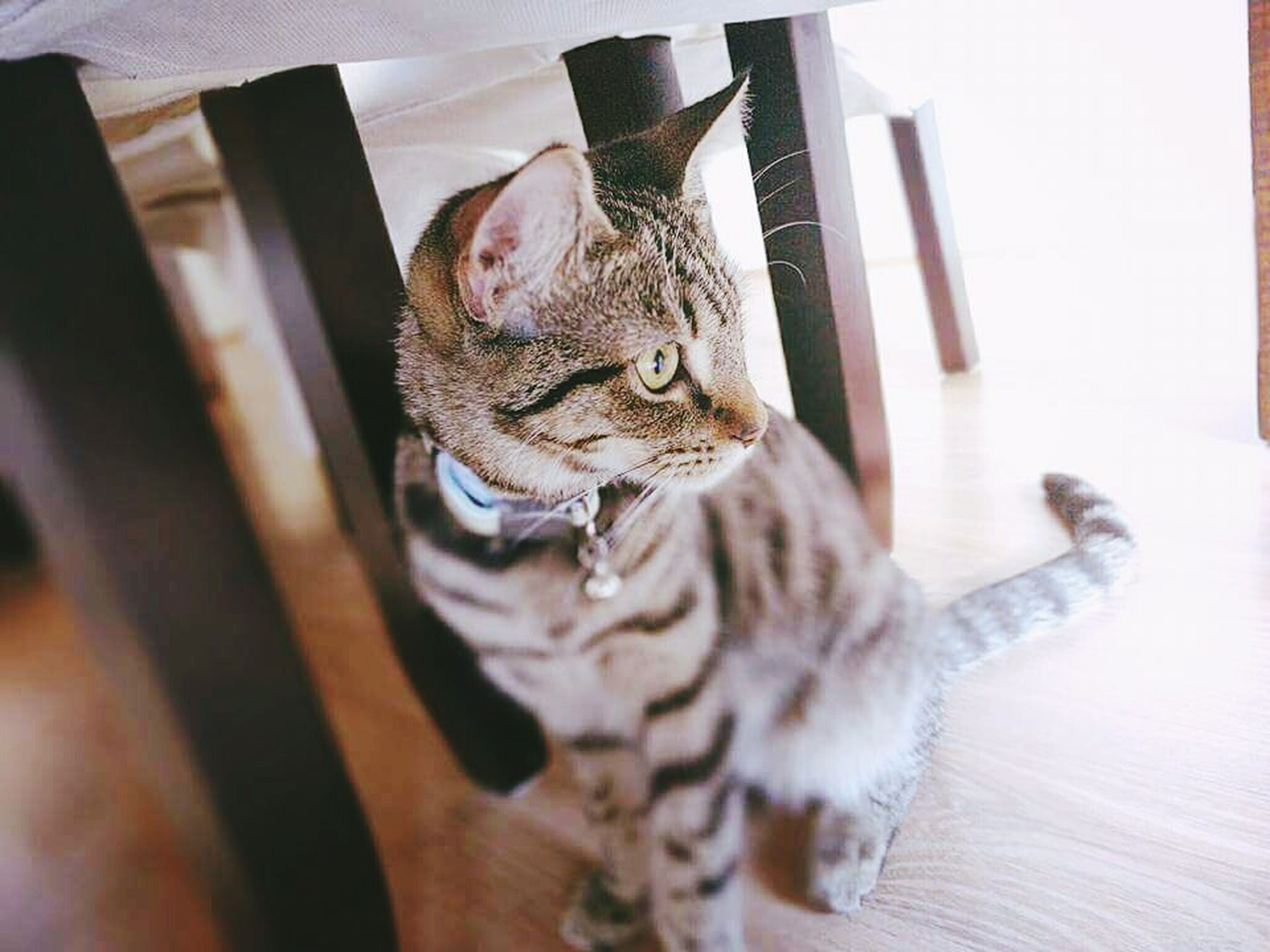 domestic cat, cat, feline, animal themes, pets, one animal, domestic animals, mammal, whisker, indoors, relaxation, portrait, close-up, tabby, looking away, home interior, alertness, resting, sitting, lying down