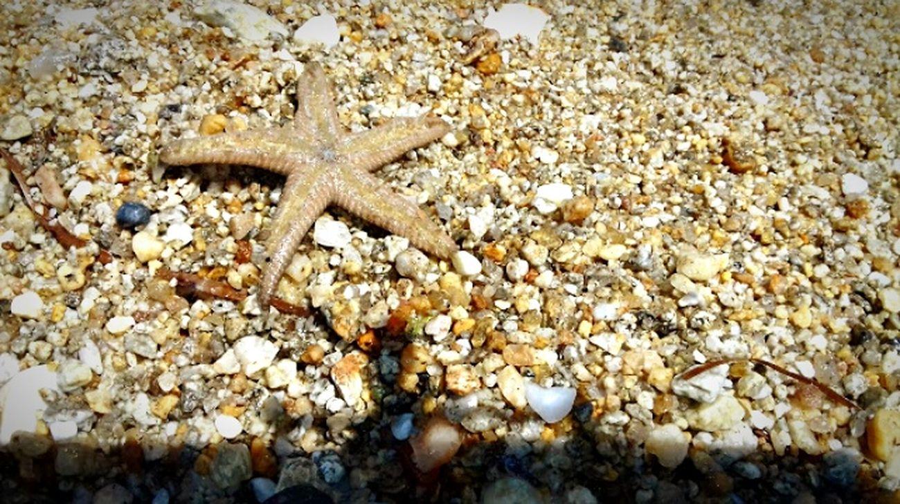 Summer Starfish At Beach 🐚🌊🌞