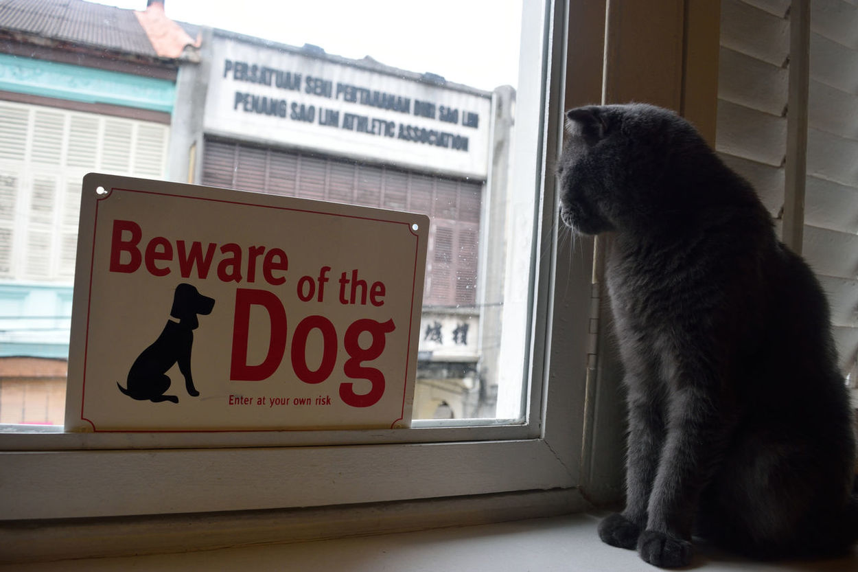 Window One Animal Pets Text Communication Indoors  Domestic Cat Cat Cafe Animal Lover Purrfect Watching Domestic Animals Animal Themes Day No People Dog Mammal Close-up Cat Beware Of The Dog Kitty Grey Catoftheday Moments Of Life Cozy